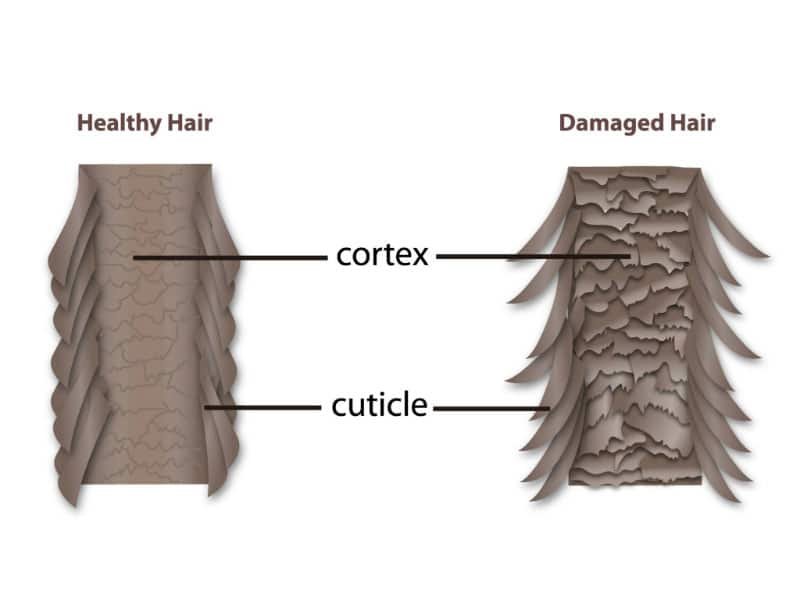 Master The Skills Of Hair Cuticle Repair Once And For All