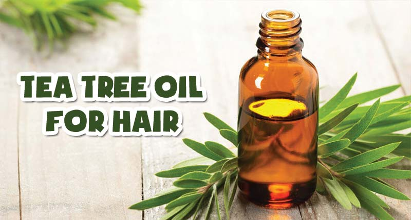 Get The Best Of Tea Tree Oil For Hair? - Do Like This!
